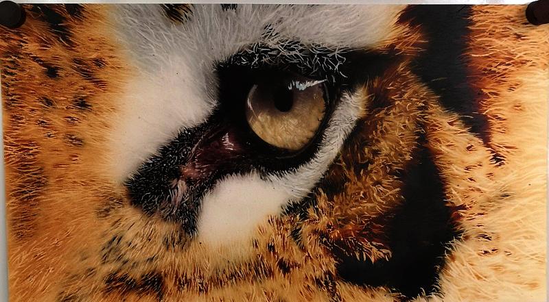 œil-tigre-hyperréalisme-aérographe-formation-aérographe-école-réalisme-art-artiste-peintre-peindre-formation-école-hyperréalisme-cours-lecon-formation