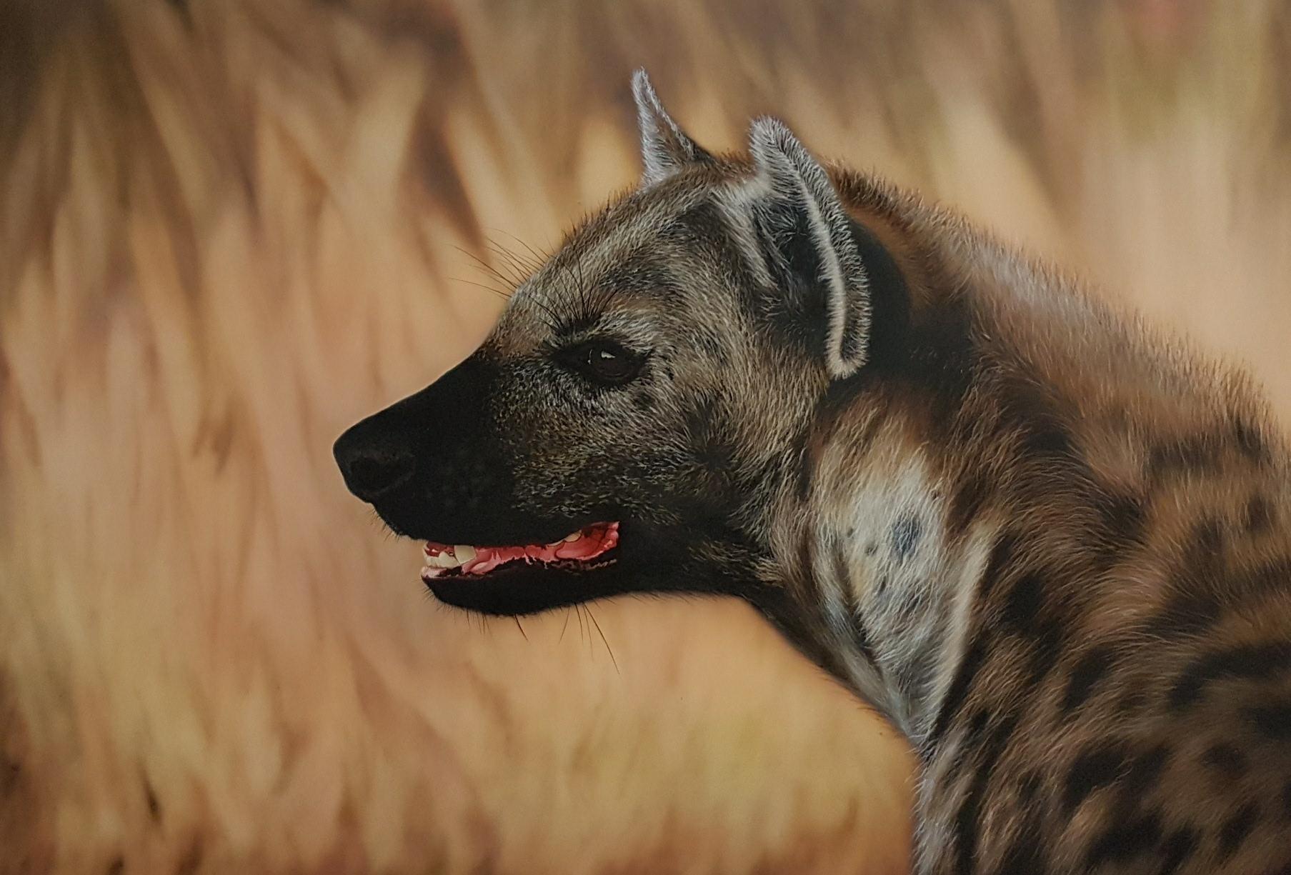 hyène a l aérographe, formation et stages aérographe